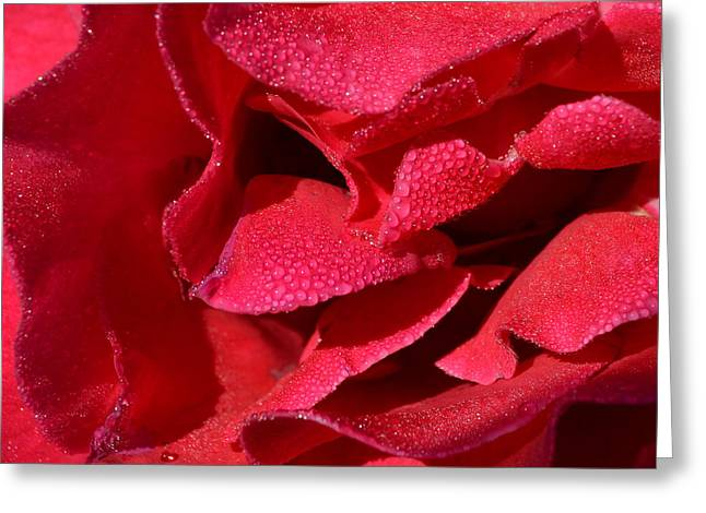 Rosa Red 1.1 Greeting Card