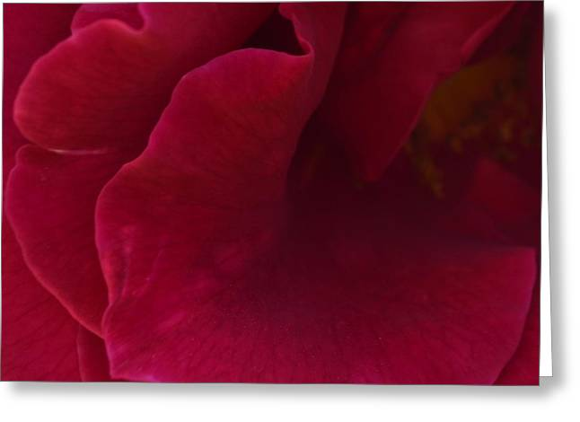 Rosa Red 1.2 Greeting Card