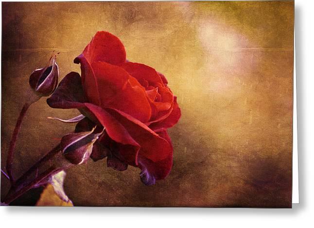 Rosa Rossa Greeting Card by Orazio Puccio