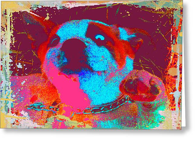 Rosco Belly Up Greeting Card by Erica  Darknell