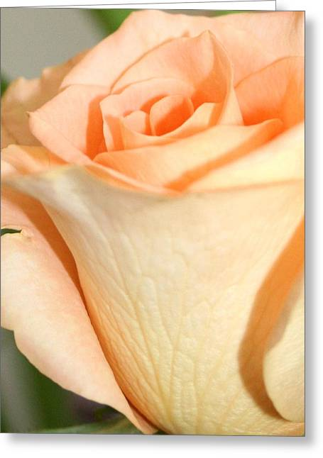 Rose 1 Greeting Card