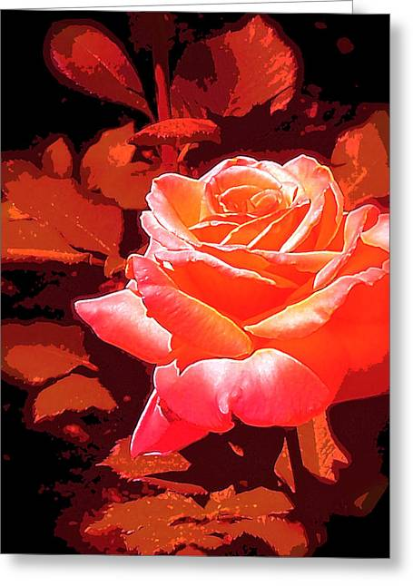 Rose 1 Greeting Card by Pamela Cooper