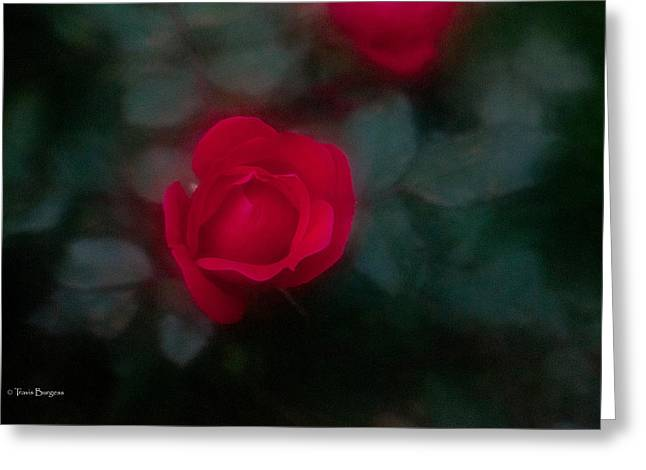 Greeting Card featuring the photograph Rose 1 by Travis Burgess