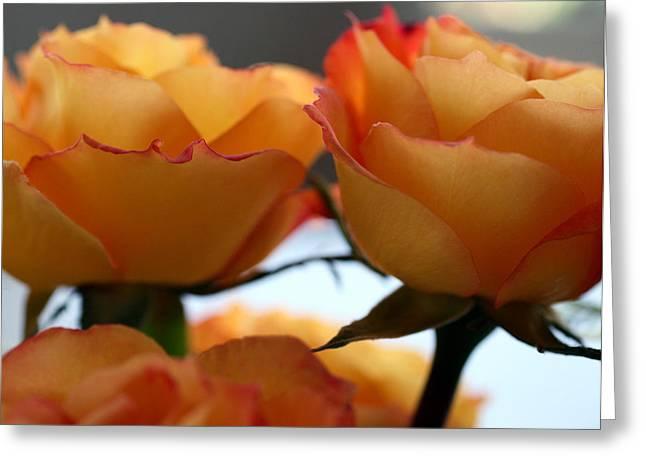 Rose 11 Greeting Card