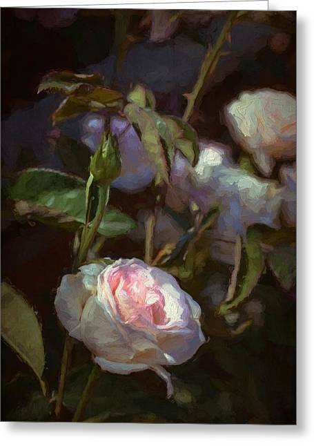Rose 122 Greeting Card by Pamela Cooper