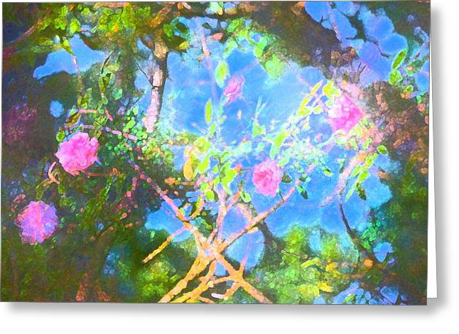 Rose 182 Greeting Card by Pamela Cooper