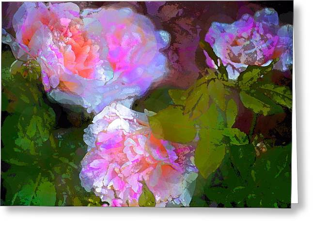 Rose 184 Greeting Card by Pamela Cooper