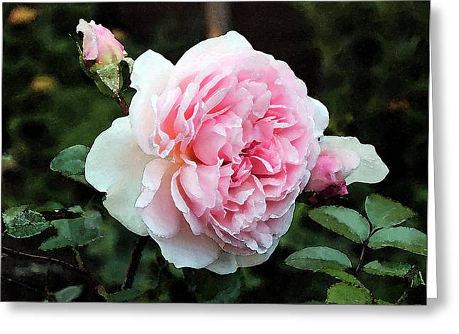 Greeting Card featuring the photograph Rose 2 by Helene U Taylor
