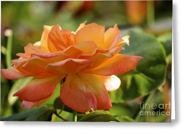 Rose 2 Greeting Card