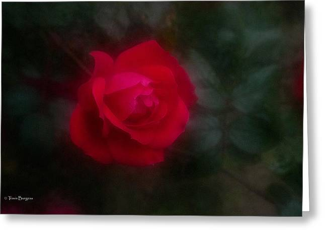 Greeting Card featuring the photograph Rose 2 by Travis Burgess