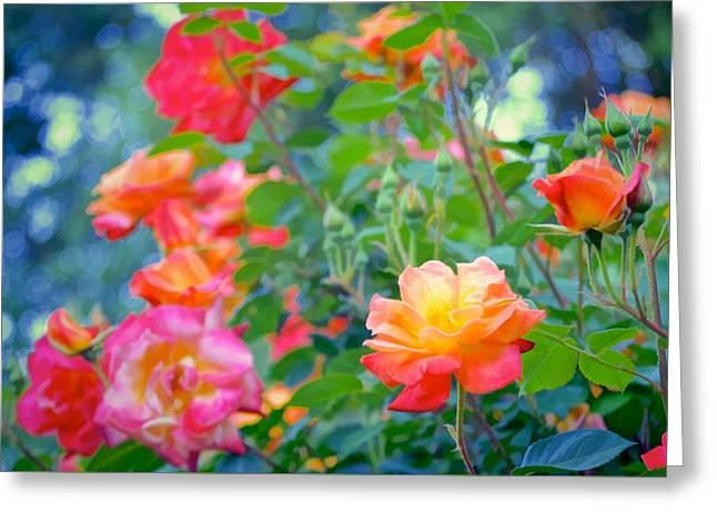 Rose 294 Greeting Card by Pamela Cooper