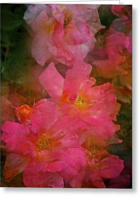 Rose 316 Greeting Card by Pamela Cooper