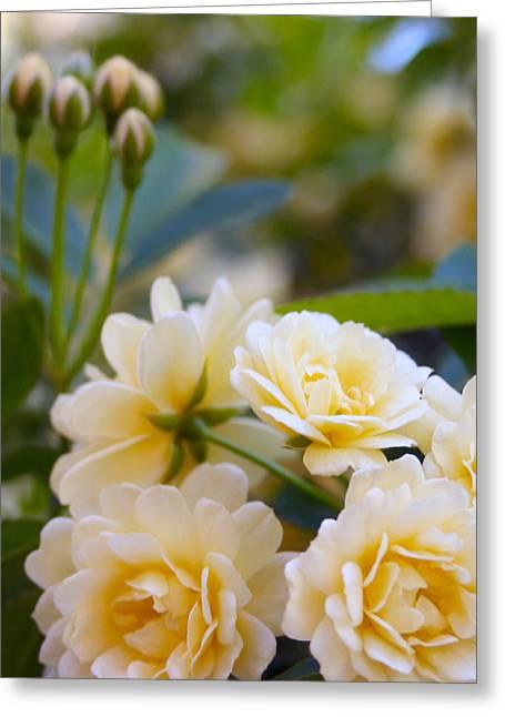 Rose 4 Greeting Card