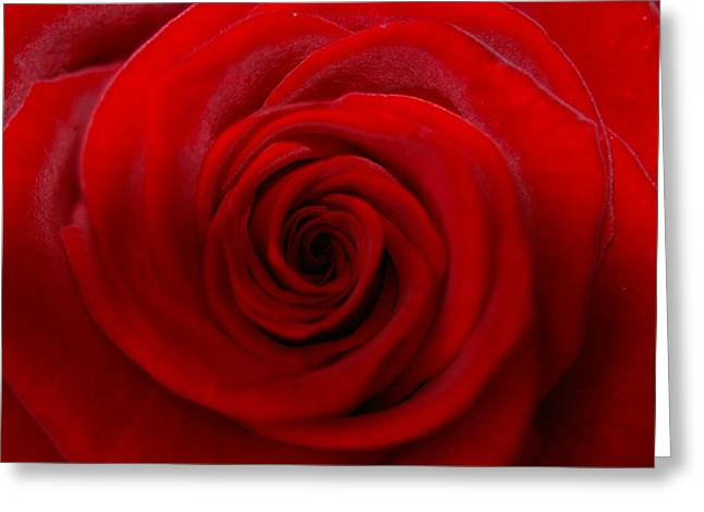 Rose 5 Greeting Card by Kennith Mccoy