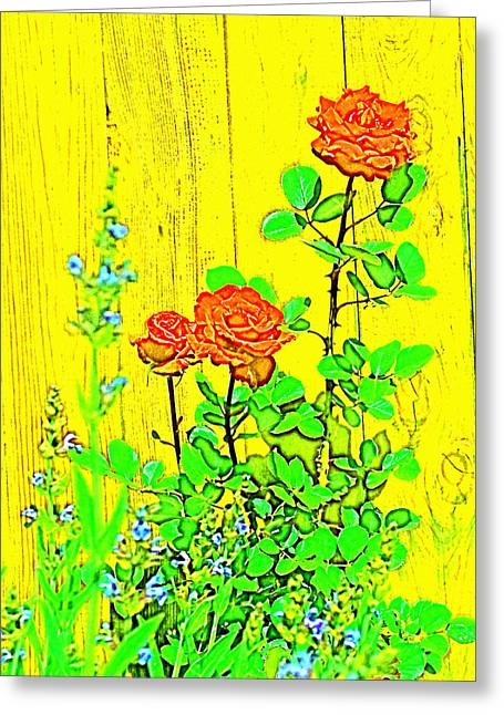 Rose 9 Greeting Card by Pamela Cooper