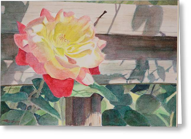 Rose Aglow Greeting Card by Christopher Reid