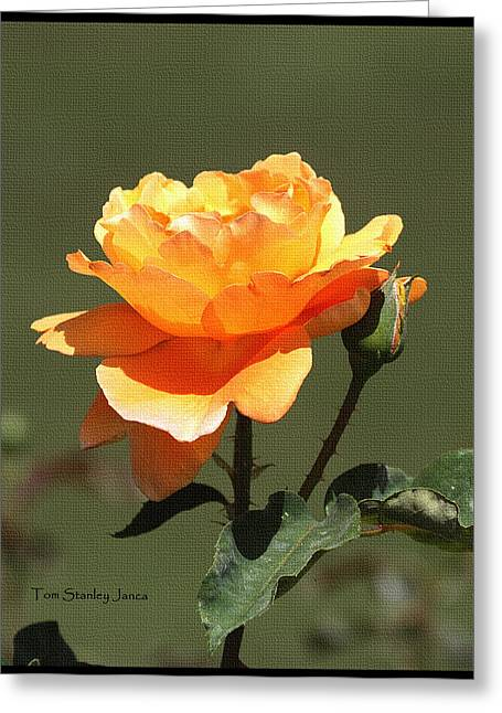 Rose And Bud At Mcc Greeting Card by Tom Janca