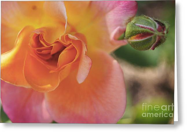 Greeting Card featuring the painting Rose And Bud by Debra Crank