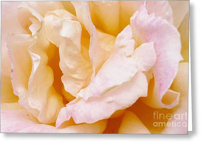 Rose Au Naturale Greeting Card by Paul Clinkunbroomer