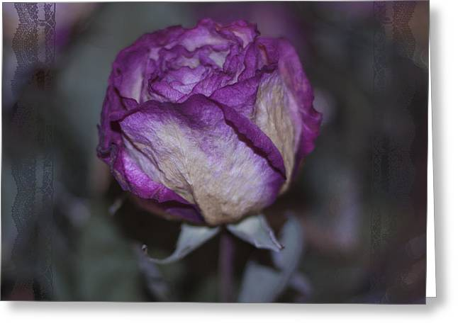Greeting Card featuring the photograph Rose Beauty After by Sandra Foster