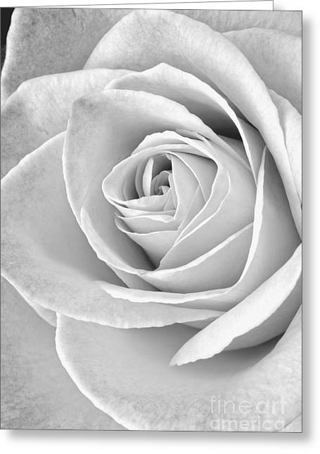 Rose Black And White Greeting Card