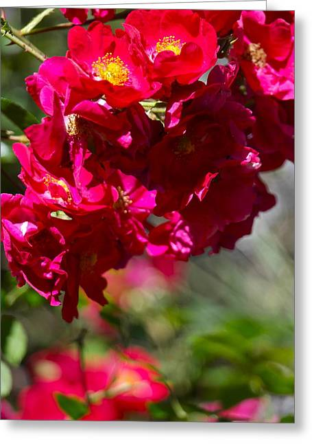 Greeting Card featuring the photograph Rose Bouquet by Michele Myers