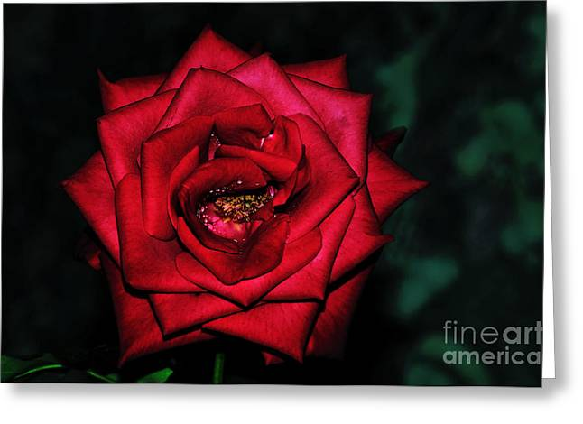 Rose By Night Light Greeting Card