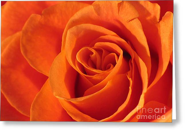 Greeting Card featuring the photograph Rose Close Up by Art Photography