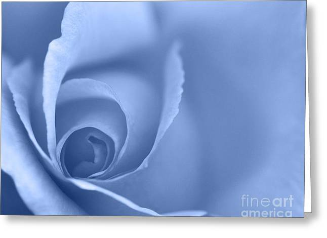 Rose Close Up - Blue Greeting Card by Natalie Kinnear
