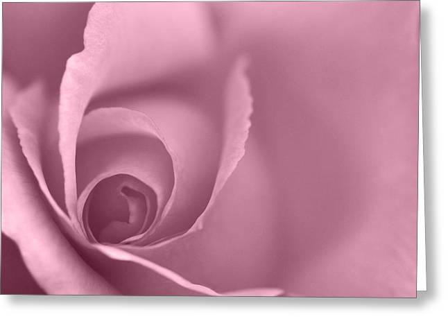 Rose Close Up - Plum Greeting Card by Natalie Kinnear