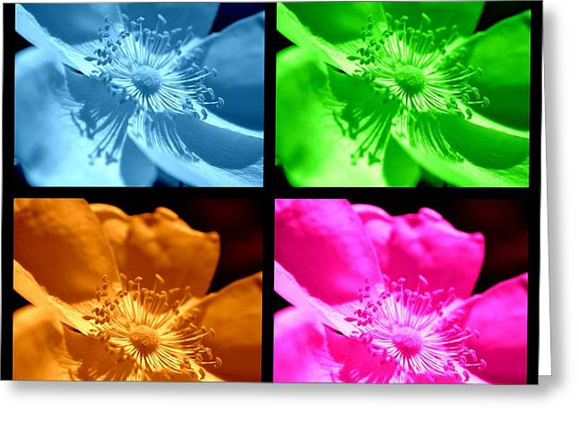 Greeting Card featuring the photograph Rose Collage by Kelly Nowak