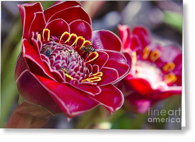 Rose De Porcelaine Greeting Card by Sharon Mau