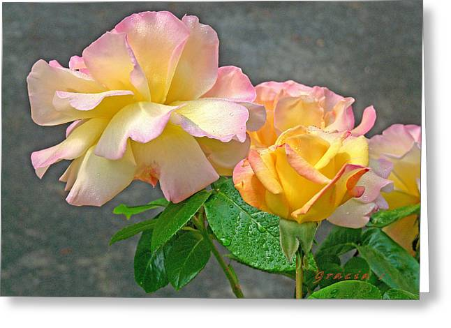 Rose Delight  Greeting Card by Gracia  Molloy