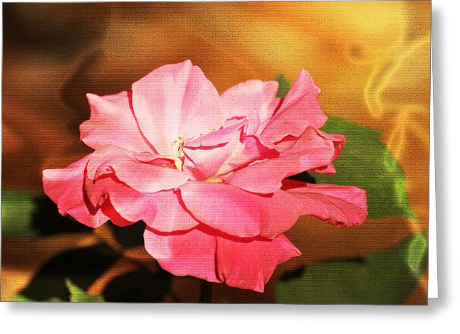 Rose Delight Greeting Card
