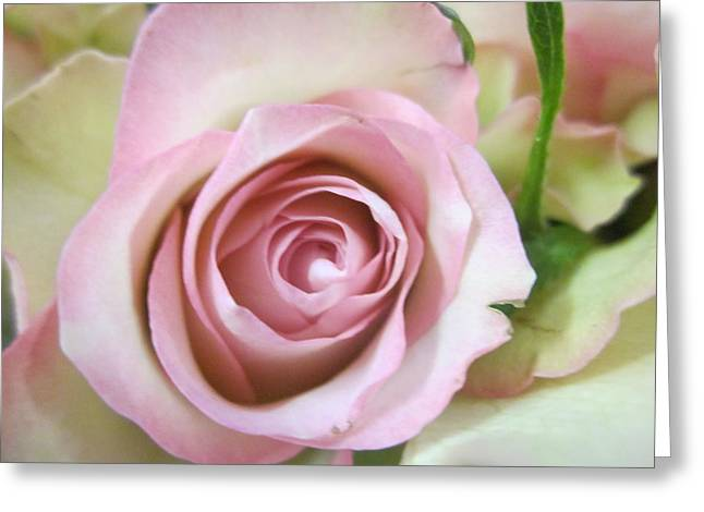 Rose Dream Greeting Card