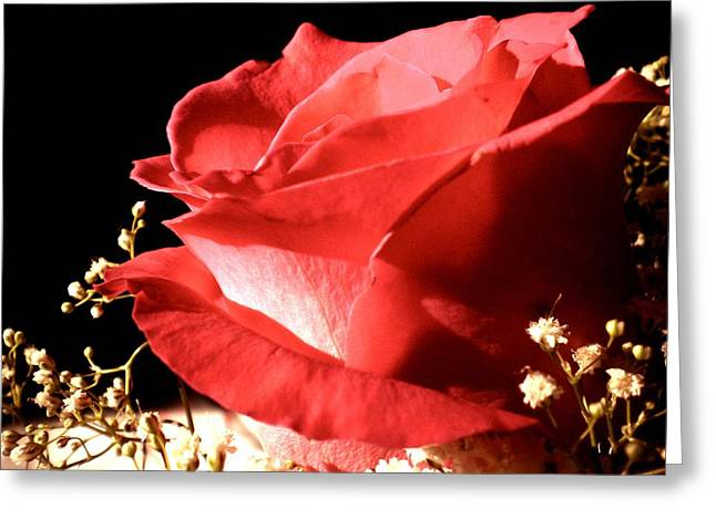 Rose Greeting Card by Elizabeth Fredette