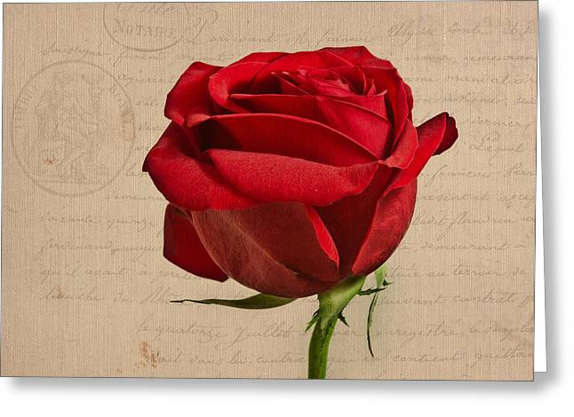Rose En Variation - S2at03a Greeting Card by Variance Collections