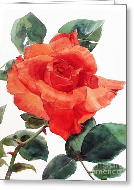 Watercolor Of A Single Red Rose I Call Red Rose Filip Greeting Card