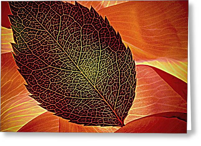 Rose Foliage On Rose Petals Greeting Card by Chris Berry
