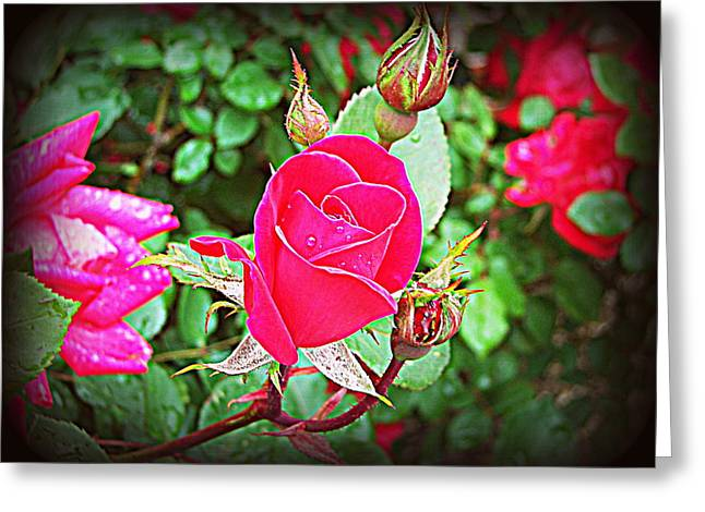 Rose Garden Centerpiece 2 Greeting Card