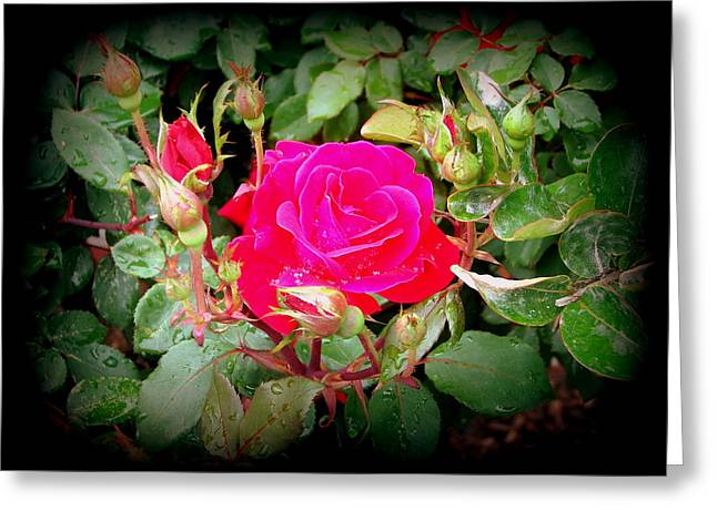 Rose Garden Centerpiece Greeting Card
