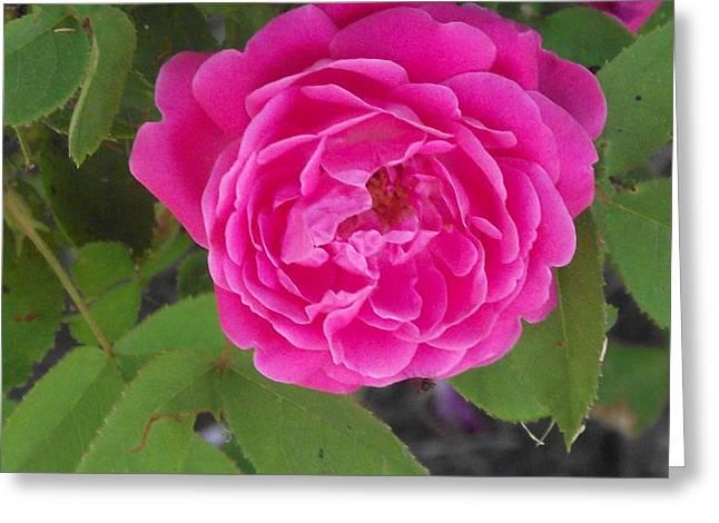 Rose Gem Greeting Card