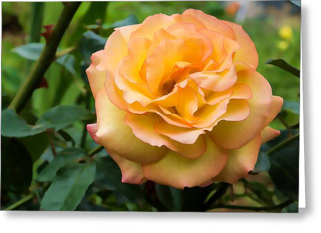 Early Summer Blooms Impressions - Elegant Peach Rose Greeting Card