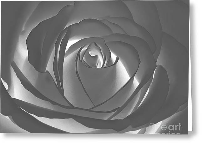Greeting Card featuring the photograph Rose by Geraldine DeBoer