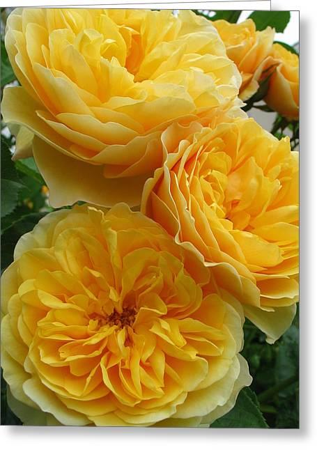 Rose Graham Thomas Greeting Card by Sabine Edrissi