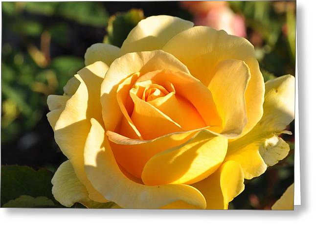 Greeting Card featuring the photograph Rose - Honey Bouquet by Sabine Edrissi