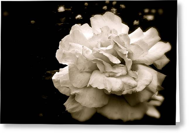 Rose I Greeting Card by Kim Pippinger