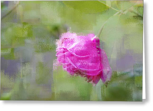 Greeting Card featuring the photograph Rose In Pink by Linde Townsend