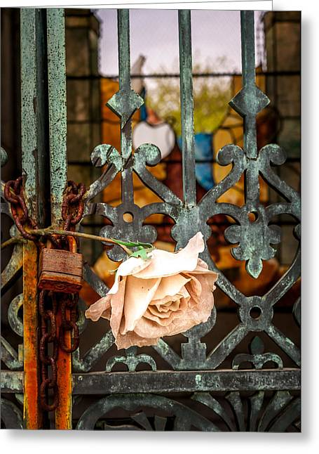 Rose In Remembrance Greeting Card by Andy Crawford