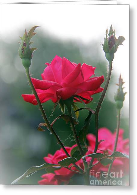 Rose In The Fogg Greeting Card